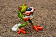 gallery/frog-1339892_640